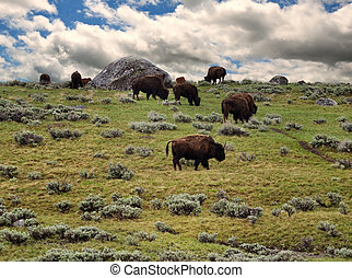 bisons feeding in the mountain against a dramatic sky