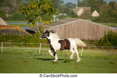 Trotting Horse - Photo of a trotting pet horse