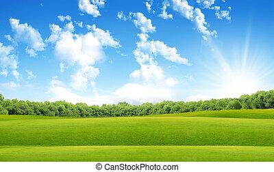 Green field in sun beams
