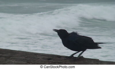 Ominous Bird Before the Storm - An ominous black bird sits...