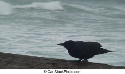 Ominous Black Bird Before the Storm - An ominous black bird...
