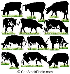 12 Detailed Cows Silhouettes Set