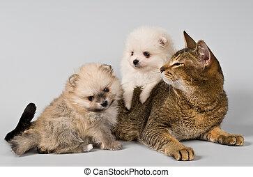 Cat and puppies  in studio