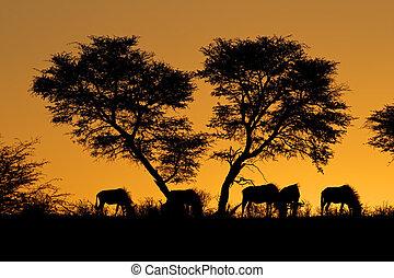 Tree and wildebeest silhouette - Blue wildebeest...