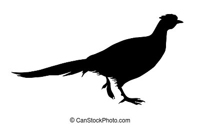 illustration of the pheasant on white background