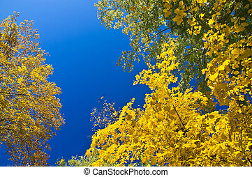 Autumn maple branch with yellow leaves against the blue...