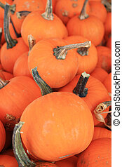 Minature pumpkins - Many small pumpkins for sale at the...