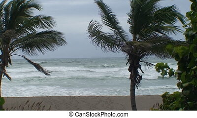 Palm Tree Ocean Storm - A shot of palm trees in the wind and...