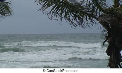 Palm trees and Rough Surf - A zoom shot of palm trees in the...