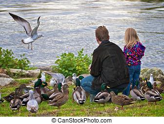 pai, filha, alimentação, Pássaros