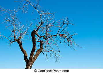 Hibernating almond tree - Dry hibernating almond tree...