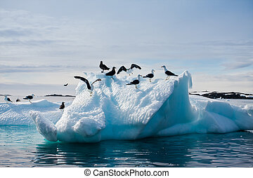 Seagulls in Antarctica - Seagulls are sitting on a glacier...