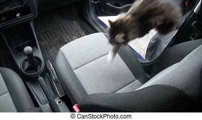 The cat in the car