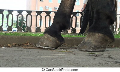 Horse's hooves.