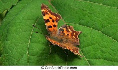 Butterfly - butterfly on a flower