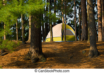 Tent Camping Campsite - Tent Camping in the Woods at a...