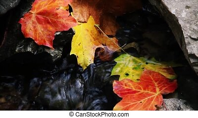 Autumn Brook Loop HD - Seamlessly looping. Colorful autumn...