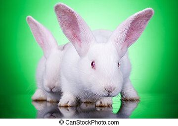 aggresive look of two bunnies standing on a green background