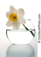 Narcissus in a small glass vase the