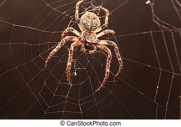 Dreadful Cross spider on his net in the darkness