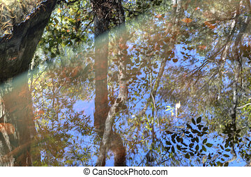 Abstract Reflection of Forest into Swamp Water.