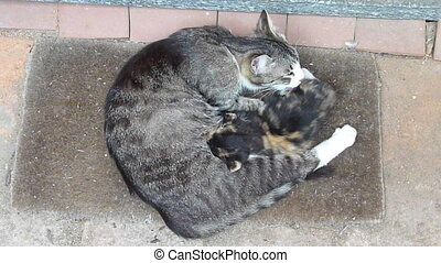 newborn kittens - female cat feeding kittens