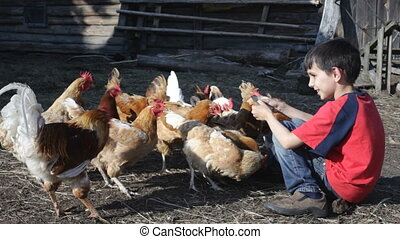The boy and chickens