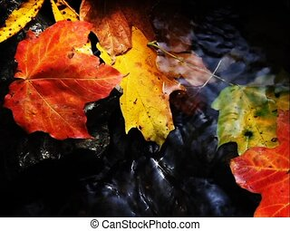 Autumn Brook Loop SD - An assortment of colorful autumn...