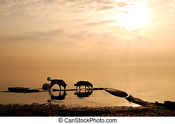 Two dogs by the sea at dawn