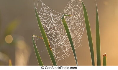Web, grass