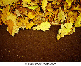 Fallen leaves by the side of the road, may be used for text