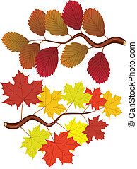 fall elm and maple leaves - vector branches set with fall...