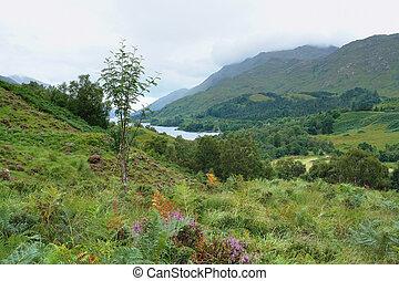 colorful Scottish Highlands - beautiful overgrown Scottish...