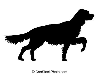 silhouette of the setter on white background