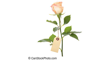 single rose with a blank label