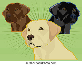Various Labrador Retrievers - Labrador retriever dogs;...
