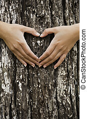 Saving our forest - Female hands making an heart shape on a...