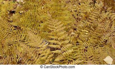 brown autumn fern on wind