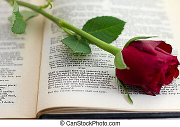 Sonnet 18 with red rose - William Shakespeares sonnet number...