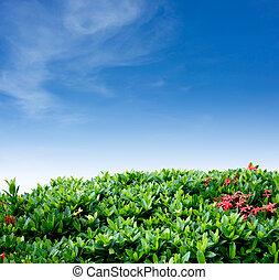 sky, buske, Staket