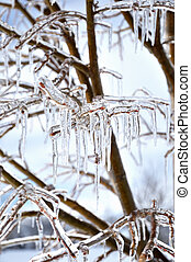 icicles on the tree branches, close up