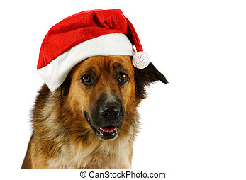 Portrait of a mixed breed christmas dog, on white background