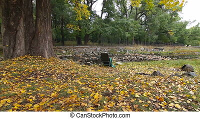 DOLLY: lonely chair in autumn park - lonely chair in autumn...
