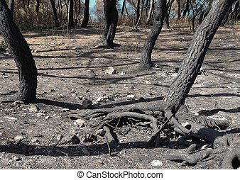 arid forest ground - natural disaster scenery with arid...