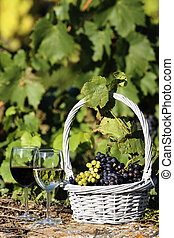 the wine world - two glasses of wine and grapes in a basket