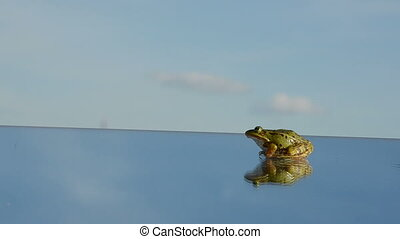 green frog jump on mirror