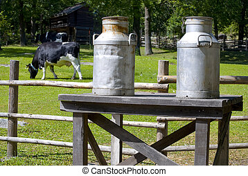 Milk bottles - Milk cans on a bench, a cow feeding grass in...