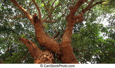 beautiful tree with foliage closeup