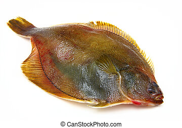 Fresh fishes flounder on white background