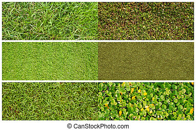 Set of grass - Set of textures of different kinds of grass,...